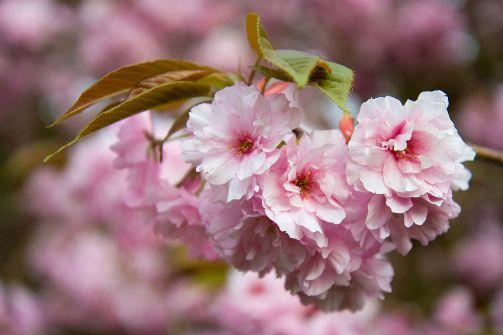 flower-1814_960_720.jpg