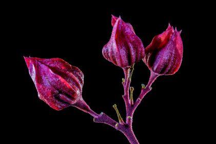 flower-305841_960_720.jpg
